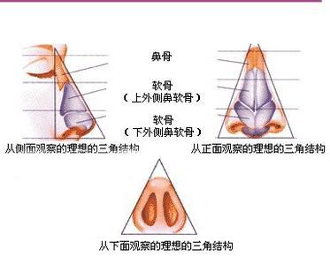 鼻子各部位名称图解